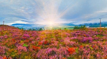 Niebo, Sezon, Lato, trawa, Słońce, Przyroda - B87002196